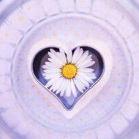 daisy, flower, heart-6304767.jpg